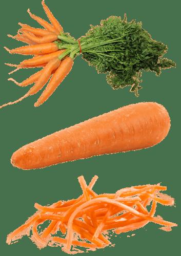 La carotte à une forte concentration de caroténoïdes