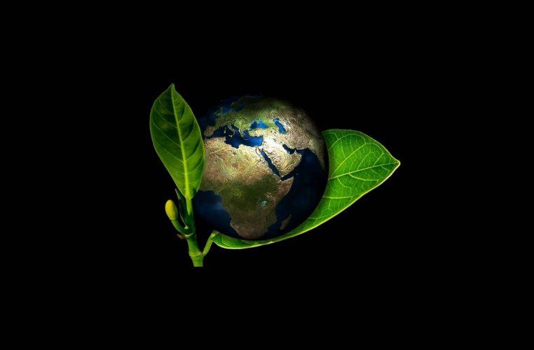 la terre entre les feuilles