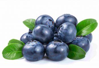 Bleuet sauvage (Vaccinium angustufolium)