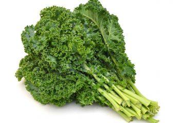 Chou frisé (Brassica oleracea/sabellica)